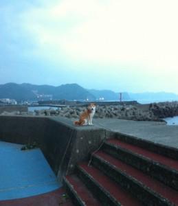外房の日本犬