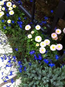 小さいけれど力強い花。